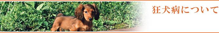 狂犬病について